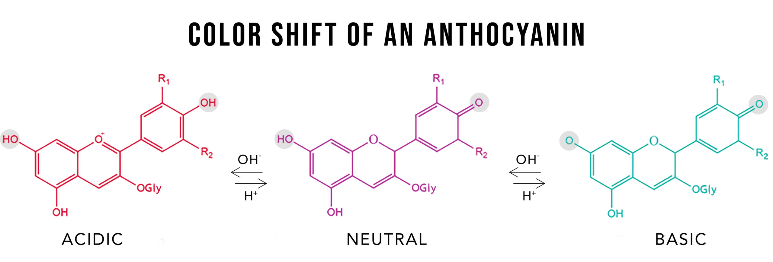 diagram of a color shift of anthocyanin