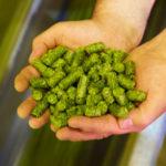 chlorophyll and chlorophyllin green natural color in hands. Colorantes Naturales verdes en manos