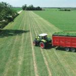 local uk field of grass for chlorophyll chlorophyllin harvest