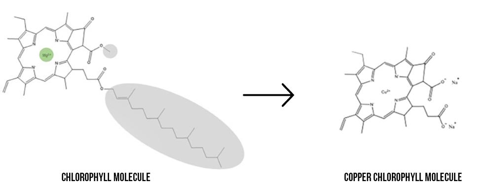 chlorophyll vs copper chlorophyll molecule
